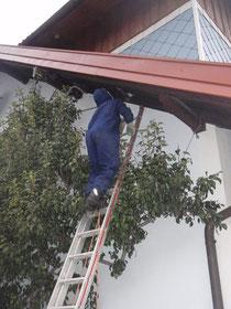 Die FF-Roith bei der Bekämpfung eines hinter der Dachschalung versteckten Wespennestes