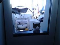 Katze im Cockpit