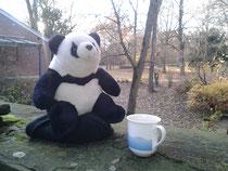 Panda im Park