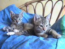 Timy et Miky, 2 mois