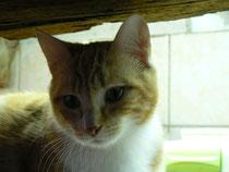 Basile, 10 mois