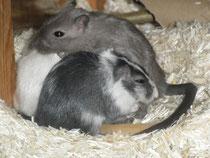 Unsere ersten Rennies: Speedy, Black Bird, Bianca und Goldie