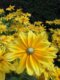 Du trägst das Licht der Sonne in dir, so wie diese Blume. Lass es erstrahlen, lass deinen inneren Heiler seine Arbeit für dich tun...