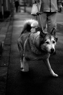 aborder un chien en laisse