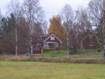 定番のスウェーデンパープルに白樺。