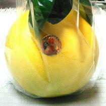 熊本県八代産の晩白柚です。