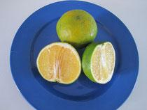 Orangen Tangelo