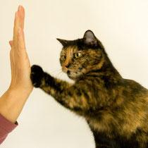 """give me five"""