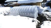 雪の中の育苗ハウス