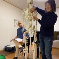 骨格模型を見ながら身体の仕組みを勉強