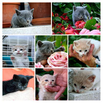 Nuestro s lindos gatitos