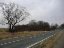 Kalefeld: Ricklingsberg