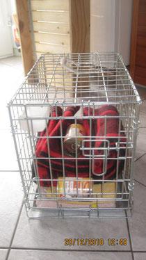 Ein Transportkorb, mit Decken und Katzenfutter
