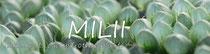 多肉植物・サボテン販売のミリー