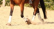 Angemessenes Training und gute Bodenverhältnisse sind Voraussetzung für Gesunde Pferdebeine