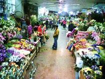 北京の花市場