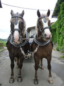 Franzi (links) und Flittchen