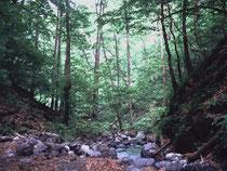 秩父の大山沢渓畔林
