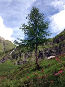 Memminger Hütte Natur Landschaft Baum traumhaft Alpen E5 Natur wandern Holzgau
