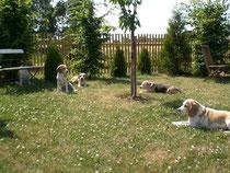 Unsere Meute im Hundegarten