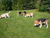 Welpentreffen im Hundegarten