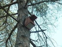 caixes niu, tecnologia i natura
