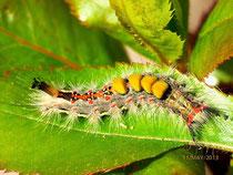 Cliqueu la foto per anar a insectes de la Serralda de Marina