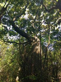 伊豆海岸沿いの木