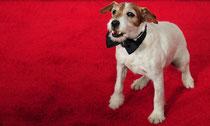 Le vainqueur des Oscars 2012