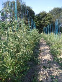 une photo du jardin (en 2010)