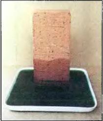 Рис. 54. Действие капиллярности в стеновом кирпиче после двух часового всасывния воды