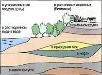 Рис. 29. Местонахождение углерода в природе