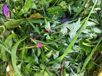 みずみずしい野草の新芽たち