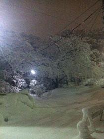 ここは北欧?と見まがうほどの雪!夜中に新雪の中を歩き周りました!ほんとうに美しい世界でしたよ!