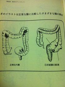 大腸の不思議な構造に改めて気づく