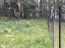鹿柵の中の写真