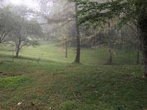 鹿柵の外の写真