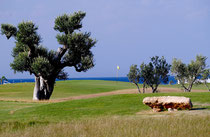 Golf Club San Domenico