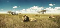 写真提供:南アフリカ観光局