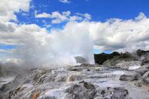 Geysir in Rotorua