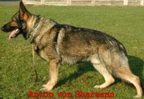 *Anton von Sharazan, Eigenaar/africhter: Arend Kooij, Lutten (NL)