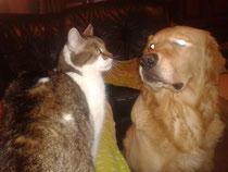 Finley mit Katze