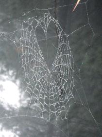SpiderNet Heart MAUI 2013