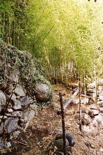 Sentier dans la forêt de bambous