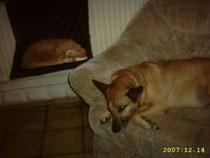 Flip und Dingo
