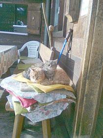 2 Katzen genießen die Sonne