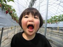 徳島 インプラント 歯科 歯医者 イチゴ狩り