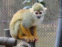徳島 インプラント 動物園 さる