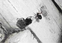 """Оксана Ефремова. Сказки из мира насекомых. """"Муха Цокотуха"""""""