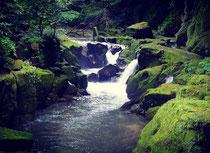 鹿児島 世界遺産 ツアー タビココ ジオパーク